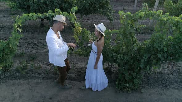 Rural Love, Aerial View on Winemaker Couple Drinks Wine at Vineyard From Glassess Outdoors