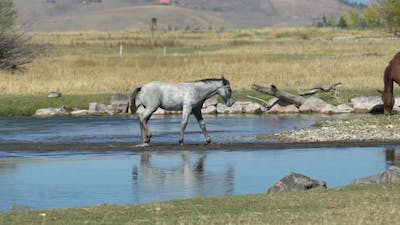 River crossing by a horse
