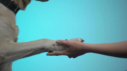 Female Hand Holding Dog Paw Against Blue Background Help Pet Volunteer Program