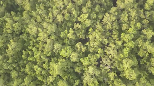 Fly over green tree forest