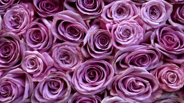 Thumbnail for Natural Roses Background