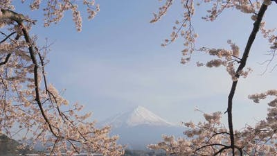 Japan Sakura