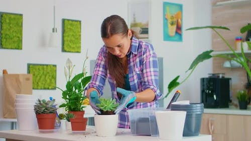 Arranging the Flower in Pot