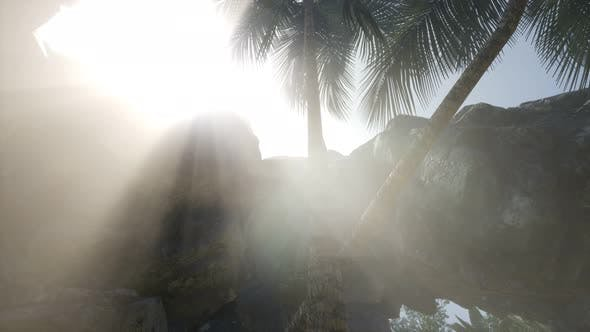 Thumbnail for Big Palms in Stone Cave with Rays of Sunlight