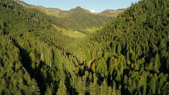 Aerial view of pine tree forest near the alps mountain range, Europe.