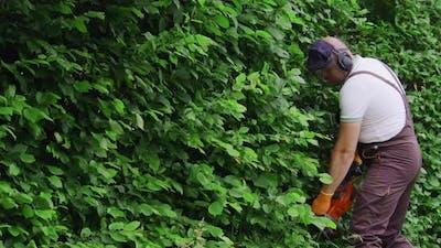 Gardener in Uniform Trimming Hedge Using Electric Scissors