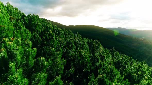 Thumbnail for Above a Mountain Forest