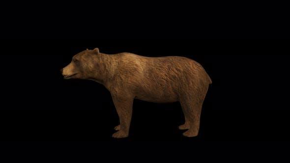 Thumbnail for 4K Bear Idle