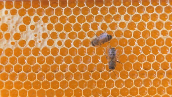 Thumbnail for Swarm of bees working on a honeycomb carries honey and nectar.