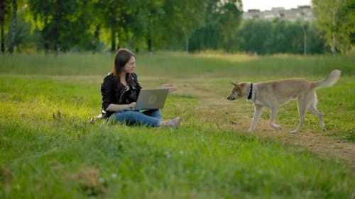 A Purebred Dog in the Park Comes To His Mistress, Sitting with a Laptop on Her Knees.