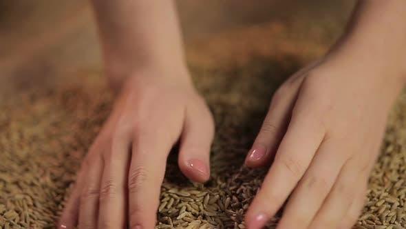 Thumbnail for Female Hands Enjoying Touch of Harvested Rye Grain