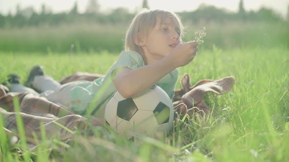 Thumbnail for Portrait of Charming Little Boy Enjoying Sunny Summer Day on Meadow. Cute Caucasian Blond Kid Lying