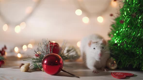 Cover Image for Gray Mouse Walks Among the New Year Attributes. The Concept of the Celebration, Costumes