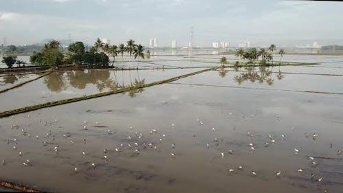 Vue aérienne Repose-cigogne à bec ouvert asiatique devant le cocotier