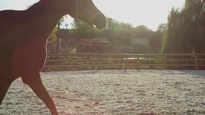 Horse running in a horse corral
