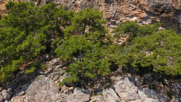 Cover Image for Aerial View Trees Growing On The Mountain