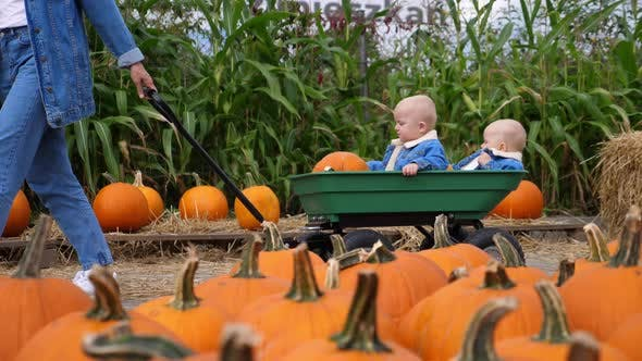 Thumbnail for Fun Day at Pumpkin Patch. A Cart with Two Caucasian Babies Pushed By Mom, All in Coordinated Denim