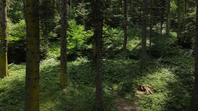 Green Environment Forest