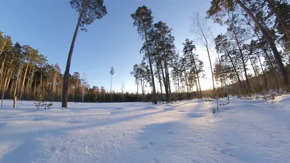 Thumbnail for Verschneiter Wald. Zeitraffer