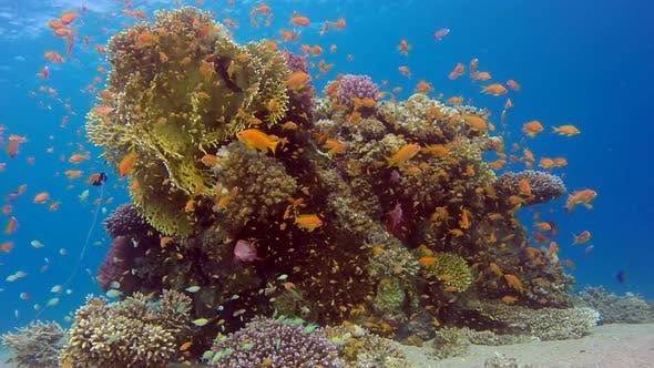 Cover Image for Underwater Colorful Tropical Coral Reef