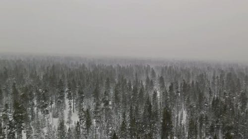 Aerial View Heavy Wet Snow Fall Winter Landscape in Snow Covered a a Snow Lies on the Branches of