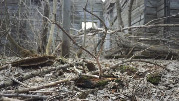 Thumbnail for Abandoned Wooden Building Ruins
