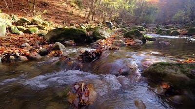 River with Flowing Water in Autumn Day