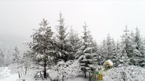 Thumbnail for Winter Carpathian Landscape, Christmas Trees in the Snow.