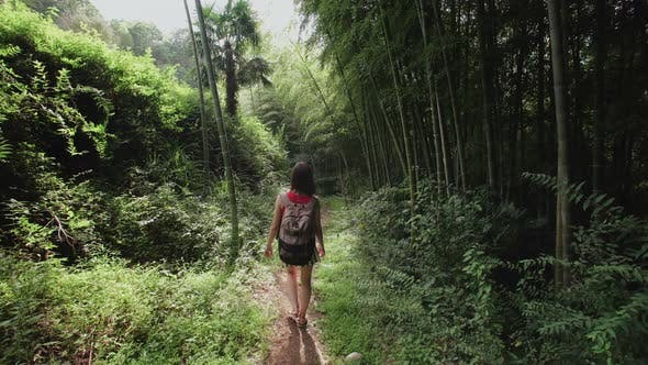 Thumbnail for Traveler Girl with Backpack Walks Along Path in Tropical Park, Plants, Palm Trees, Bamboo Plantation