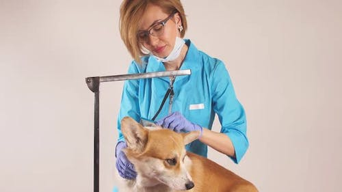 Girl in Uniform Combing the Hair of Dog