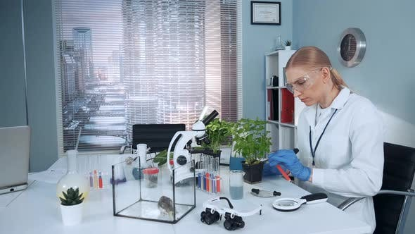 Thumbnail for In Modern Research Lab Scientist in Safety Glasses Adding Liquid To the Plant in Pot