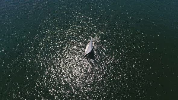 Thumbnail for Aerial Shot of a Small Boat Moving in the Dnipro on a Sunny Day in Summer