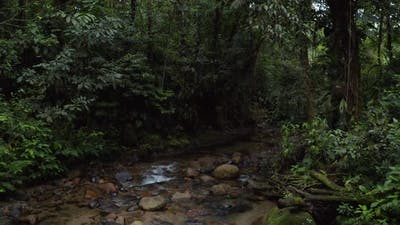 Following a tropical stream in a rainforest of South America