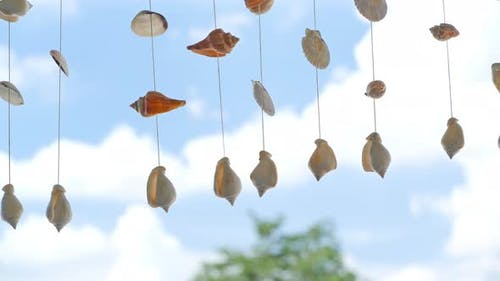 Hanging seashells.