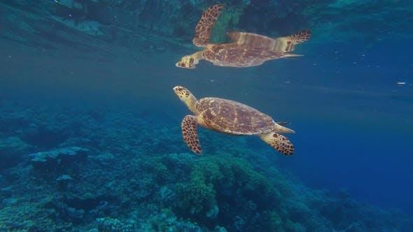 Thumbnail for Sea Turtle Breath Reflection