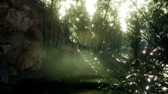 Thumbnail for Lush Green Leaves of Bamboo Near the Shore of a Pond with Stones.