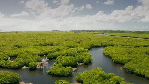 Natural Landscape of Mangrove Forests, and Aboriginal Fisherman Hut on the River's