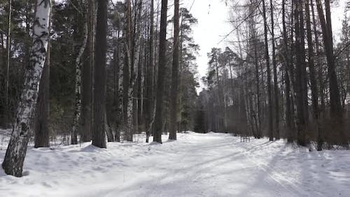 Snow covered path in forest in winter cold weather