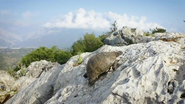 Turtle is Crawling Up the Cliff with an Amazing View of the Mountains in the Background