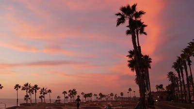 Palms and Twilight Sky in California USA