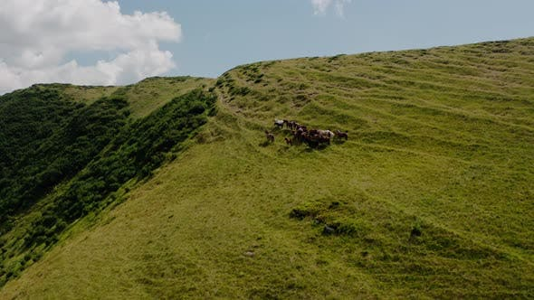 Thumbnail for Aerial Drone View. Wild Horses on the Green Mountains In Background Rock and Blue Sky. V3