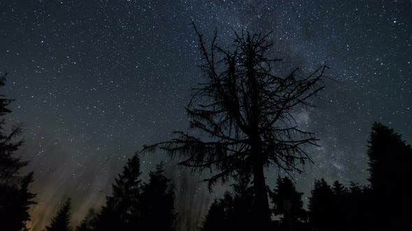 Thumbnail for Stars Sky with Milky Way Galaxy over Forest