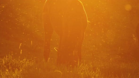Thumbnail for Horse Grazing at Sunset