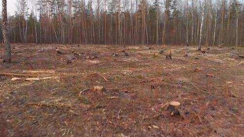 Plot of Felled Forest