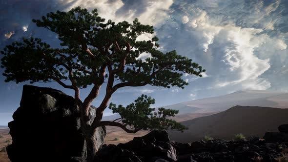 Pine Tree Desert