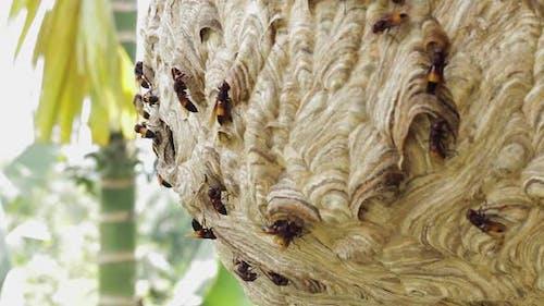 Wasp Hive With Active Wasps V