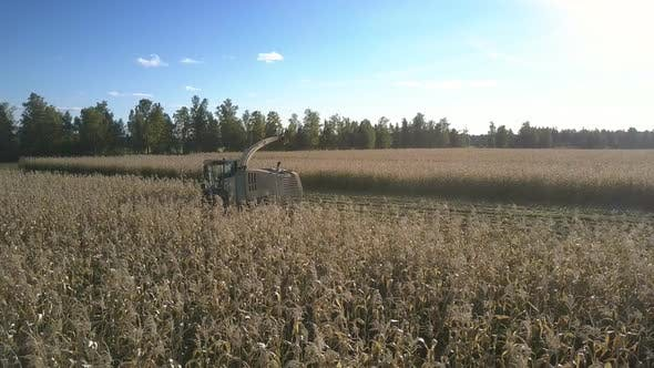 Thumbnail for Machine for Harvesting Stands on Field Among Corn Stems