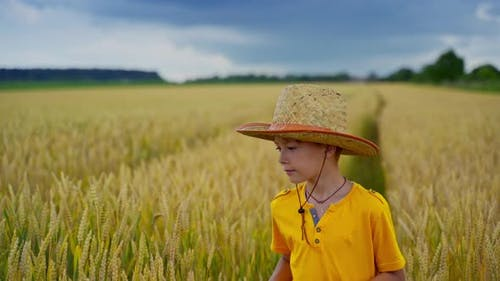 Little boy in farmland