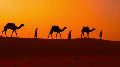 Cameleers, Camel Drivers at Sunset