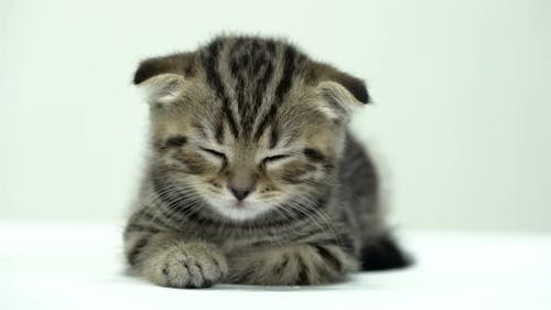 Small Kitten Is Sleeping in a White Room
